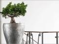 Alegria natuurlijke plantenbakken