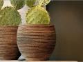 Honey natuurlijke plantenbakken