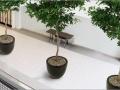 Keramiek interieurbeplanting