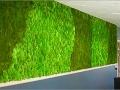 Green Wall voor bijv. kantoren