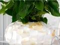 Radica natuurlijke plantenbak