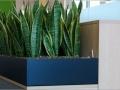 Stiel interieurbeplanting voor bijv. kantoren of scholen