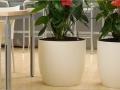 Binnenbeplanting voor foyer, lobby & kantoor