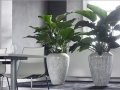 Kunstplanten, project- & kantoorbeplanting